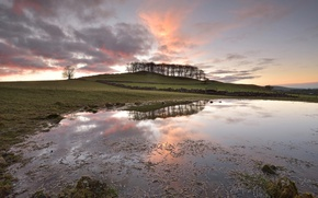 Picture field, morning, puddle
