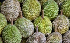 Picture macro, food, durian fruit