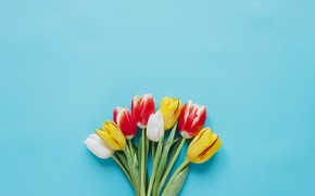 Picture Flowers, Tulips, Bouquet