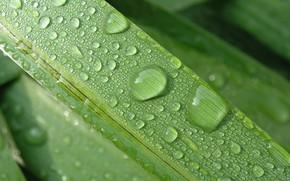 Wallpaper macro, sheet, rain, drop, nature, flower