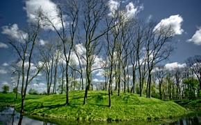 Picture trees, river, stream, island, hill
