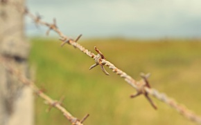 Picture macro, barbed wire, rusty