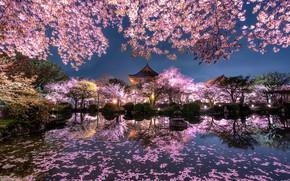 Wallpaper light, flowers, night, the city, lights, pond, spring, Japan, garden, Sakura
