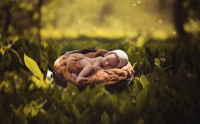 Picture summer, leaves, nature, child, sleep, socket, summer, nature, cap, baby, leaves, bokeh, bokeh, cap, child, ...