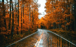 Wallpaper forest, autumn, road