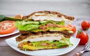 Picture greens, sandwich, tomato, salad, Turkey