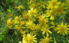 Picture Bush, forest, clearing, Hypericum