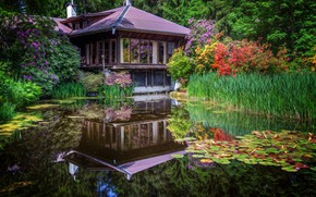 Picture flowers, pond, Japan, pagoda, house, irises