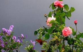 Wallpaper Park, France, rose, garden, Cagnes-sur-Mer