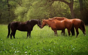 Picture animals, grass, nature, horse