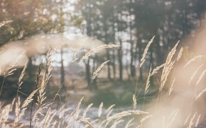 Picture winter, forest, grass, Sunny, backlight