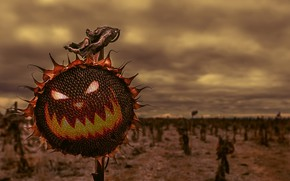 Picture field, nature, color, sunflower, Halloween, Sunflower