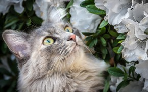 Picture eyes, cat, flowers