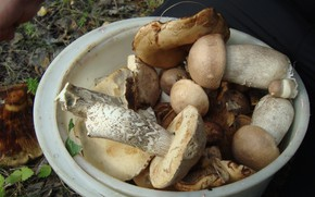 Picture forest, mushrooms, bucket