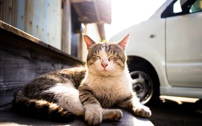 Picture stay, Kote, cat