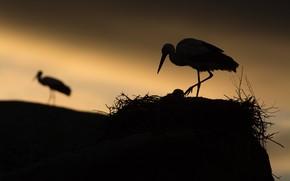 Picture night, socket, stork