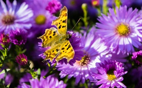 Picture flowers, butterfly, petals, insect, moth