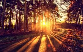 Wallpaper forest, autumn, light, road