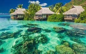 Picture Beach, Summer, Sunshine, Ocean, Tropical, Palms