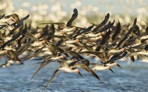 Picture birds, pack, flight
