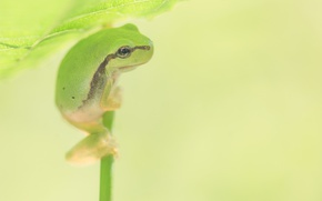 Picture sheet, background, frog, bokeh