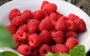Picture berries, harvest, plate, Raspberry, ripe