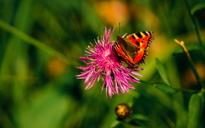 Picture green, summer, grass, flower, nature, butterfly, beautiful, fly, searching, plants, insect, outdoor, exploration