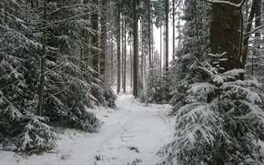 Picture Winter, Trees, Snow, Forest, Frost, Winter, Frost, Snow, Forest, Trees