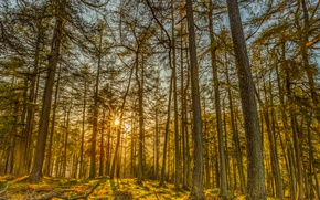 Picture Nature, Trees, Forest, Rays Of Light, The Trunk Of The Tree