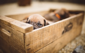 Picture dog, puppy, box
