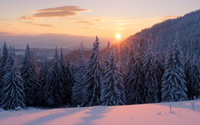 Wallpaper winter, forest, the sky, the sun, clouds, rays, snow, landscape, sunset, dawn, beauty, ate, the ...