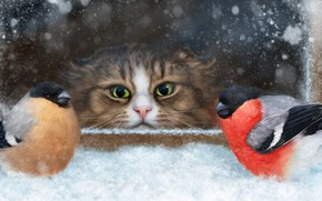 Picture cat, snow, birds, muzzle, observation, bullfinches