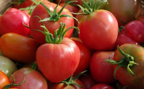 Picture autumn, harvest, vegetables, tomatoes, September, the garden, many, red