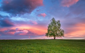 Picture summer, the sky, grass, clouds, tree, paint, spring, the evening, morning