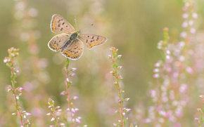 Picture flowers, background, butterfly, nature