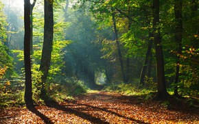 Wallpaper path, Park, the sun, trees, autumn, forest, leaves