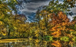 Picture Nature, Autumn, Trees, Forest