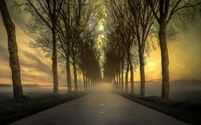 Picture road, trees, nature, fog, morning, Netherlands, Bamster