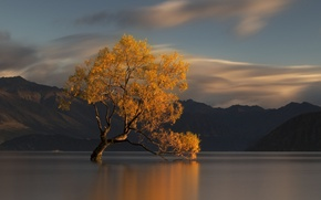 Picture autumn, water, mountains, nature, lake, tree, New Zealand