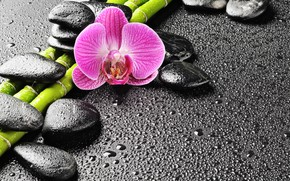 Picture drops, stones, bamboo, Orchid