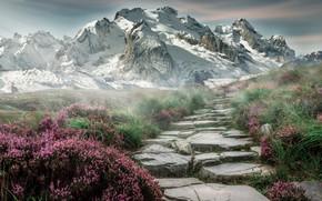 Wallpaper Flowers, Nature, Mountains, Landscape
