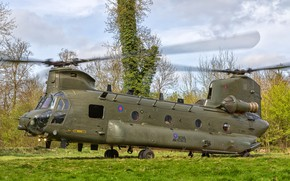 Picture grass, trees, glade, Boeing, helicopter, Vertol CH-47 HC.4 Chinook ZA713-14