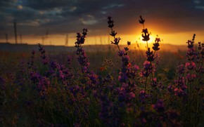 Picture field, summer, macro, sunset, flowers
