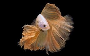 Picture macro, fish, fish, black background