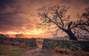 Picture clouds, tree, the fence, England, Bradgate Park