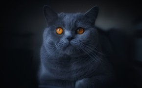 Picture cat, look, black background