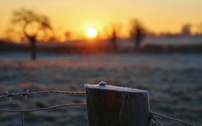 Picture frost, the sun, barbed wire
