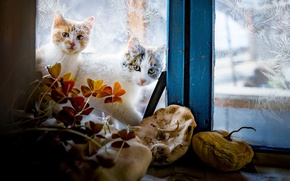 Wallpaper winter, glass, cats, patterns, window, Kote, outside the window, two things, katashi