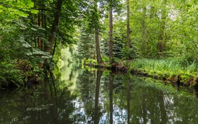Wallpaper forest, Spreewald, river, Germany