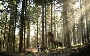 Picture forest, horse, meeting, guy, Vincent Bourilhon, the encounter